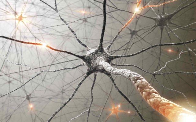 Histoire du neurone autour de laproblématique de la connexion @ Institut des sciences de la communication (ISCC) | Paris | Île-de-France | France